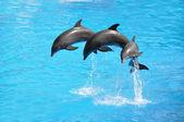 Three dolphins — Stock Photo
