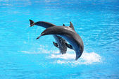 Pair of dolphins — Stock Photo