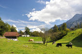 Swiss country side scenery — Stock Photo