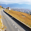 Road through the vineyards in Lavaux region, Switzerland — Stockfoto