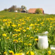 Jug of milk on spring meadow. Emmental region, Switzerland — Stockfoto #21044559