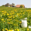 Jug of milk on the spring meadow. Emmental region, Switzerland - Stock Photo