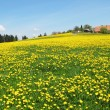 Scenic meadow in Emmental region, Switzerland — Zdjęcie stockowe #21049813