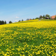 图库照片: Spring in Emmental, Switzerland