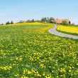 Scenic meadow in Emmental region, Switzerland — Stok Fotoğraf #21049993