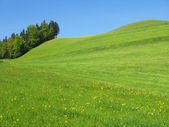 Collines pittoresques dans la région de l'emmental, suisse — Photo