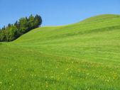 Malebné kopce v oblasti ementál, švýcarsko — Stock fotografie