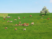 Herd of cattle on a scenic Alpine meadow. Emmental, Switzerland — Stock Photo