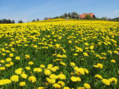 Scenic meadow in Emmental region Switzerland — Stock Photo
