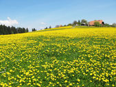 Scenic meadow in Emmental region, Switzerland — Stock Photo