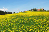 Spring in Emmental, Switzerland — Stock Photo