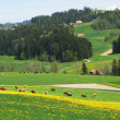 Spring in Emmen valley (Emmental), Switzerland — Foto de Stock