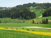 Spring in Emmen valley (Emmental), Switzerland — Stock fotografie