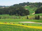 Spring in Emmen valley (Emmental), Switzerland — Photo