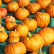Pumpkins — Stock Photo #21082637
