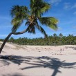 Palm tree and its shadow on a sandy beach — Stock Photo