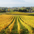 Vinyards in Montreux against Geneva lake, Switzerland — Stock Photo
