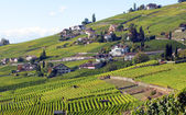 Famous vineyards in Lavaux region, Switzerland — Zdjęcie stockowe