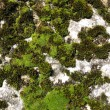 Moss on rock — Stock Photo