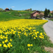 图库照片: Scenic meadow in Emmental region, Switzerland