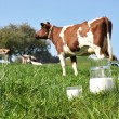 Jug of milk against herd of cows. Emmental region, Switzerland — Stock Photo #22684841