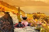 杯红葡萄酒对瑞士熔丝地区露台葡萄园 — 图库照片
