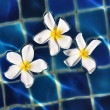 Stock Photo: Floating frangipani