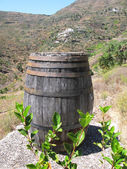 Wine barrel. Tenerife island, Canaries — Stock Photo