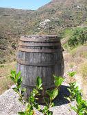 Wine barrel. Tenerife island, Canaries — Stock Photo