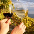 Two hands holding wineglasses against vineyards in Lavaux region — Stock Photo