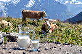 Jug of milk against herd of cows. Switzerland — Stock Photo