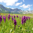 Alpine meadow. Melchsee-Frutt, Switzerland — Stock Photo