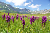 Prado alpino. melchsee-frutt, suiza — Foto de Stock
