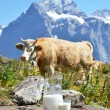 Swiss chocolate and jug of milk on Alpine meadow. Switzerlan — Stock Photo #28948581