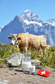 Swiss chocolate and jug of milk on the Alpine meadow. Switzerlan — Stock Photo