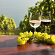 Wine and grapes. Lavaux region, Switzerland — Stockfoto