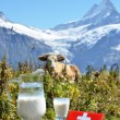 Swiss chocolate and jug of milk on Alpine meadow. Switzerlan — Stock Photo #30028995