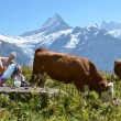 Girl with jug of milk and cow. Jungfrau region, Switzerland — Stock Photo #30029771