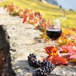 Red wine on the terrace vineyard  — Stock Photo