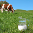 Jug of milk against herd of cows. Emmental region, Switzerland — Стоковая фотография
