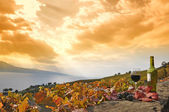 красное вино и виноград. терраса виноградники в регионе лаво, швейцария — Стоковое фото
