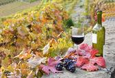 červené víno a hrozny. terasa vinice v regionu lavaux, švýcarsko — Stock fotografie