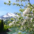Stock Photo: Spring in Switzerland
