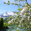 Spring in Switzerland — Foto Stock #33449549