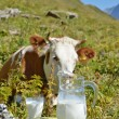 Jug of milk against herd of cows. — Stock Photo #33708131