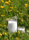 Jug of milk on the meadow — Stock Photo