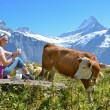 Girl with jug of milk and cows. Jungfrau region, Switzerland — Stock Photo #34908257