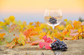 Grapes in the glass — Stock Photo