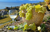Wineglass and basket of grapes. Lavaux region, Switzerland — Stock Photo