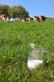 Pot de lait contre le troupeau de vaches. région de l'emmental, suisse — Photo